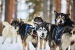 Visualiser l'album Portraits de chiens
