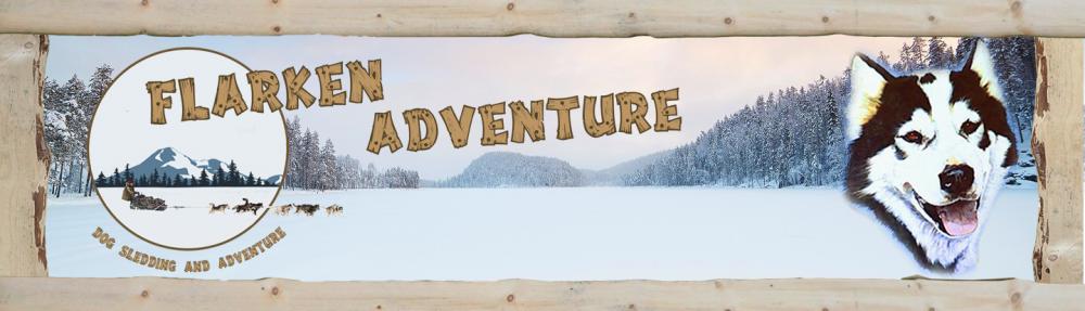 Flarken Adventure :Séjours Chiens de traîneau en laponie suédoise