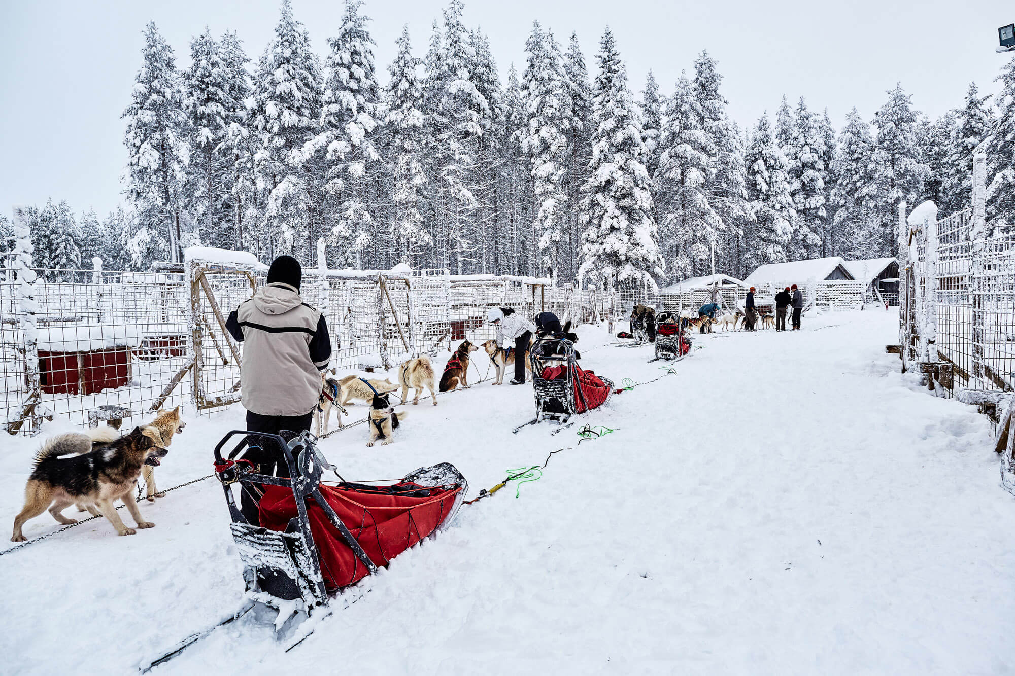 Sled ready in the kennel for the start of the trek in Swedish Lapland