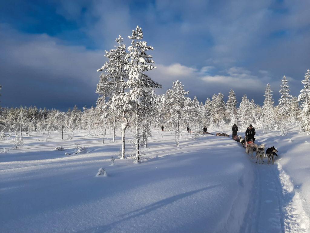 Attelages de chiens de traineaux en Laponie Suedoise