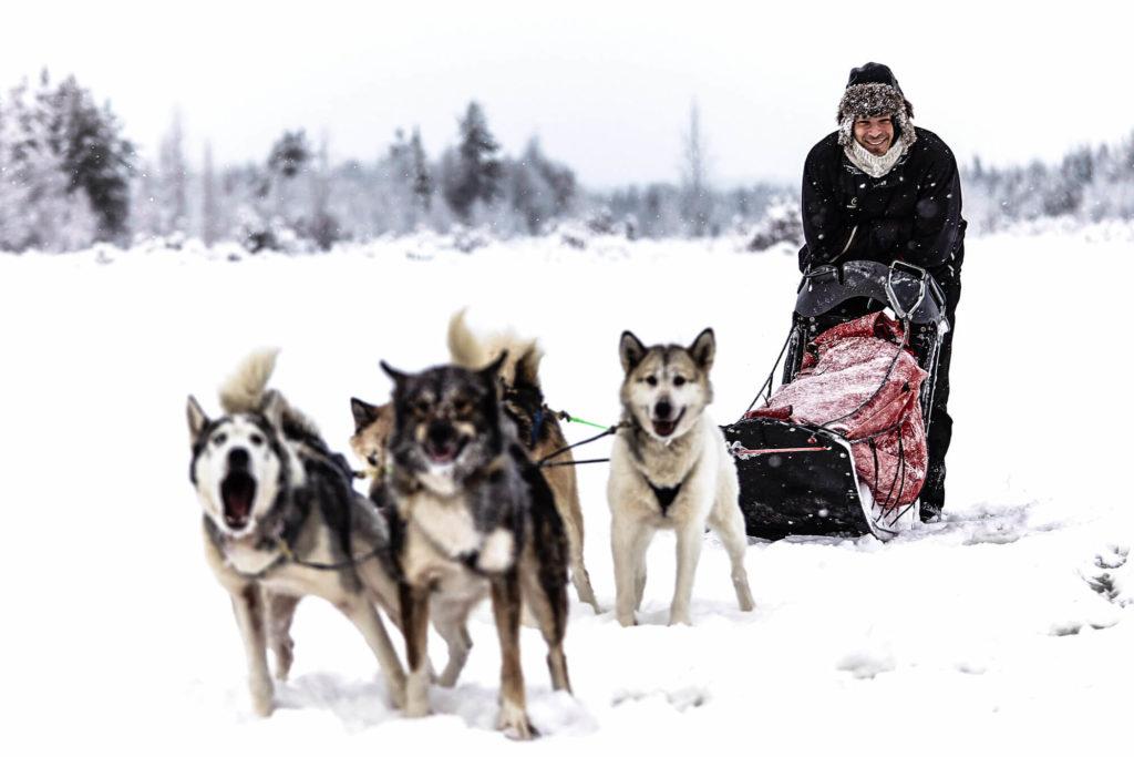 Dog Team during a dog sledding trek adventure in Swedish Lapland