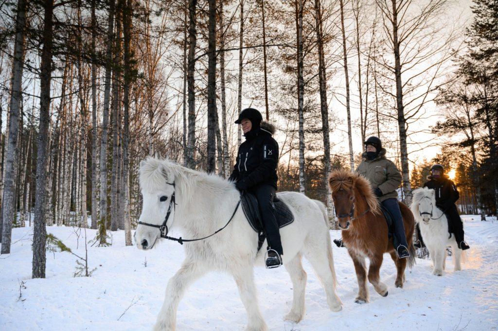 Balade à cheval en Laponie suédoise