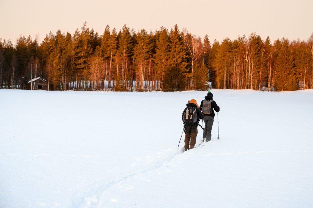 Balade en ski altaï en Laponie suédoise