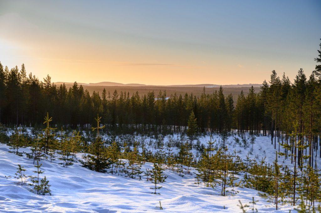 Paysage enneigé de la Laponie suédoise
