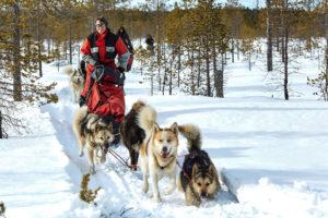 Équipés sur le traineau à chiens