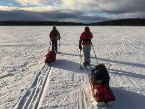 Moufles en sli altai dans le Grand Nord