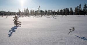 Neige en Laponie suédoise