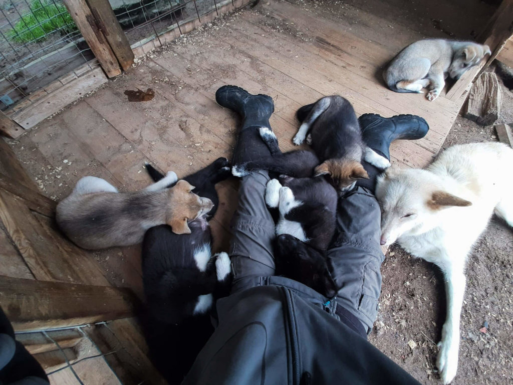 Laura au milieu des chiens