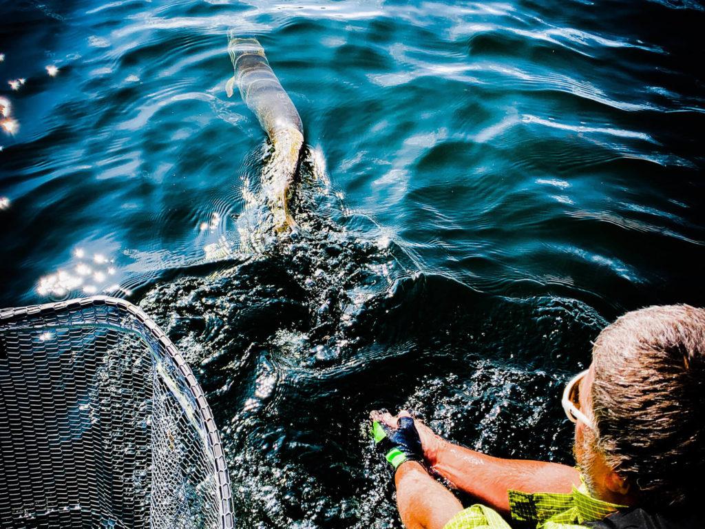 Une pêche sportive
