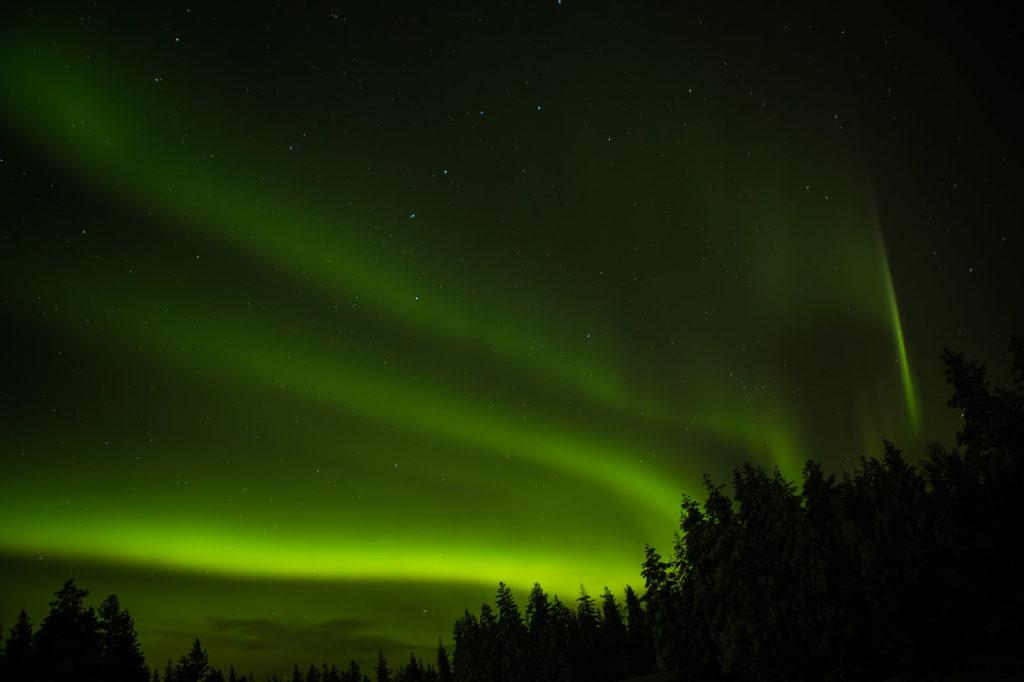 Aurores boréales au dessus des sapins en Laponie Suédoise