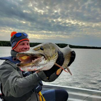 Un énorme brochet pris pendant un séjour de pêche en laponie suédoise